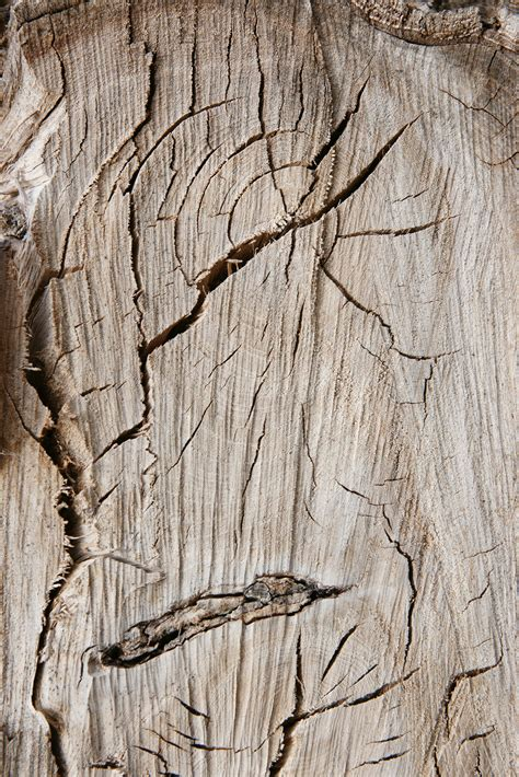 FREE 34+ Tree Ring Texture Designs in PSD   Vector EPS