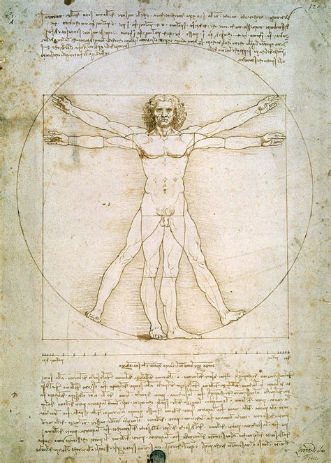 The Proportions Of The Human Figure Drawing by Leonardo da