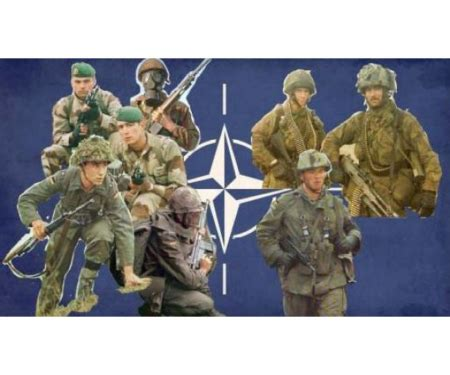 1:72 Fig