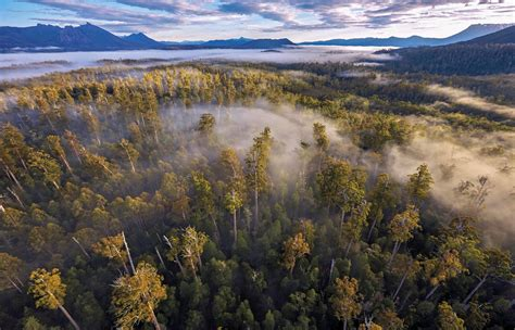 World-Heritage of Tasmanian forests considered as UNESCO