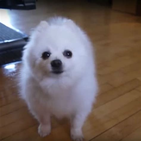 Adorable puppy covers Aphex Twin's 'Windowlicker' | Gigwise