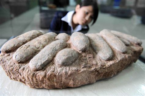 Dinosaur Egg-Stealing Spree Leads to Arrests in China